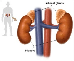 Photo: Patients with adrenal insufficiency need improved management