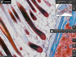 Photo: Virtual microscope images at your fingertips