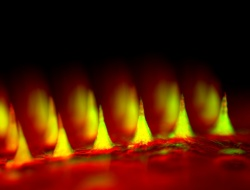 An up-close fluorescent image of the microneedle patch with insulin tagged in...