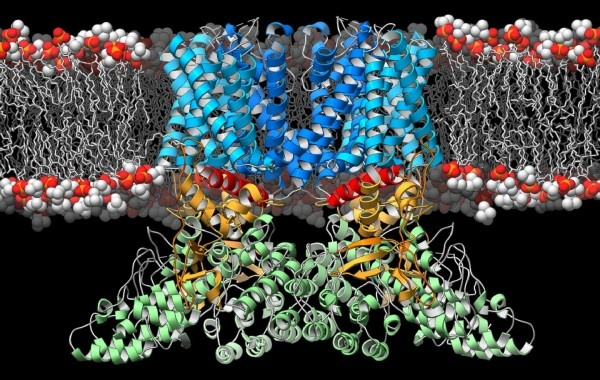 A ribbon diagram depicting the structure of the TRPV2 ion channel (blue,...