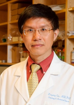 Zezong Gu, Ph.D., is an associate professor of pathology and anatomical...