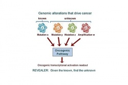 To better characterize the functional context of genomic variations in cancer,...