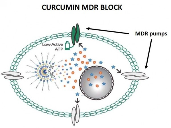 Diagram illustrating the release of the active contents of the MDR nanoparticle...
