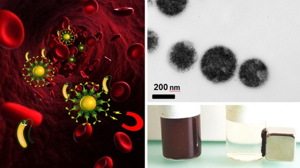 Bacteria can be removed by magnetic blood purification (left). A suspension...