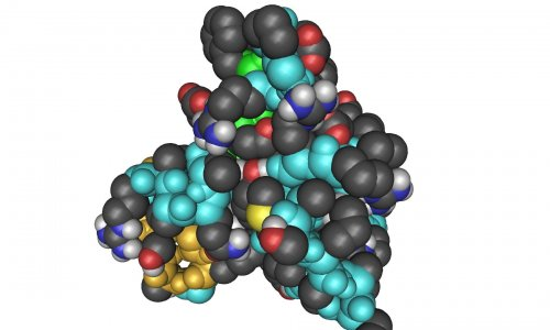 Growth Factor Igf 1 Increases Risk For Several Cancers
