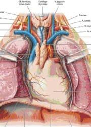 Virtual anatomy on healthcare-in-europe.com