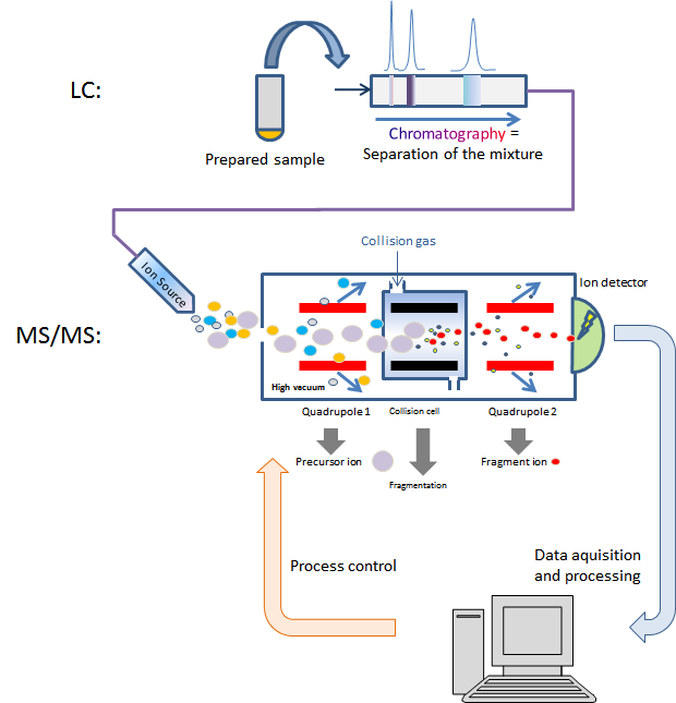 Liquid chromatography mass spectrometry.