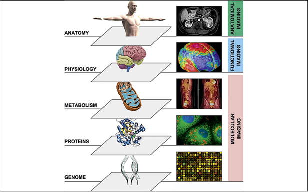 Multi-parametric imaging of tumour biology