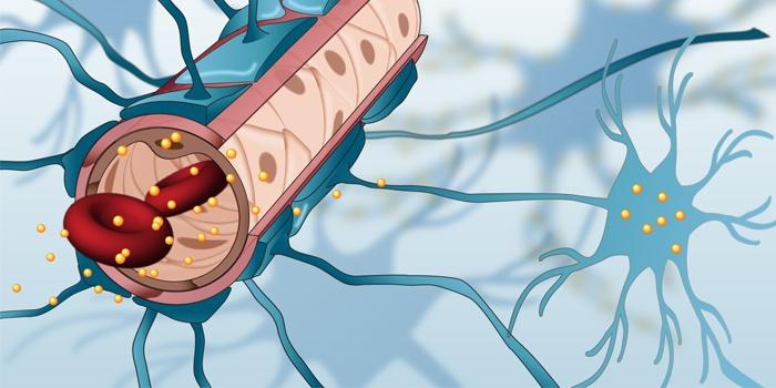 Nano Gold Trickst Blut Hirn Schranke Aus Auf Healthcare In Europe Com