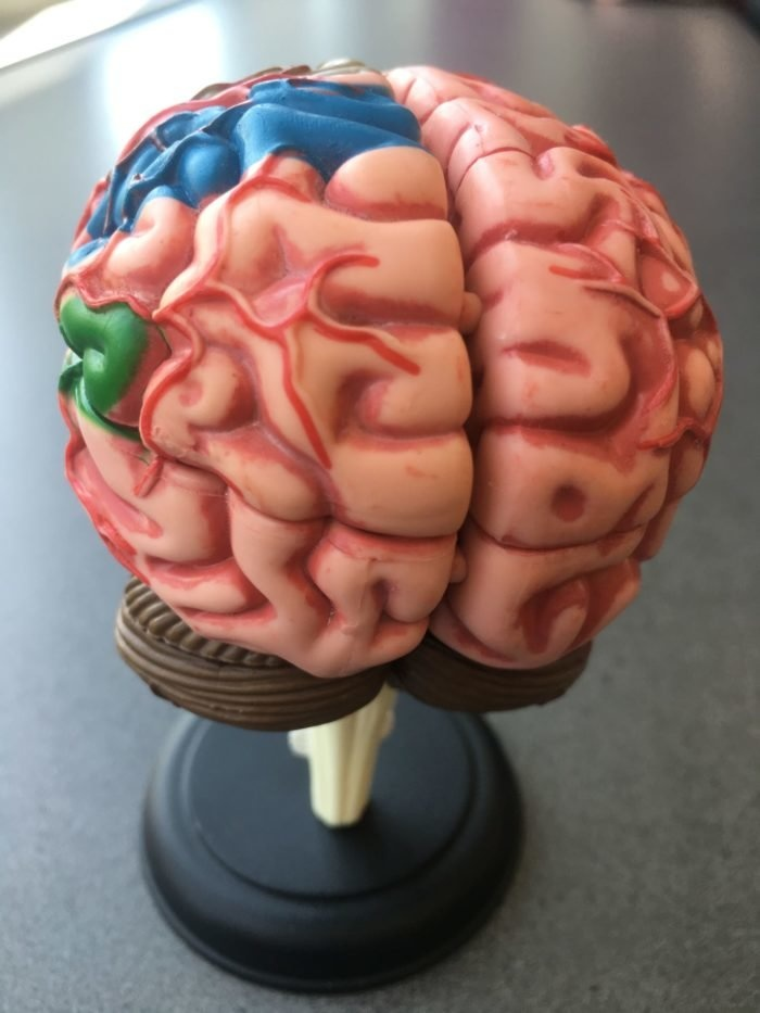 Unique patient offers insights into the brains quest to see