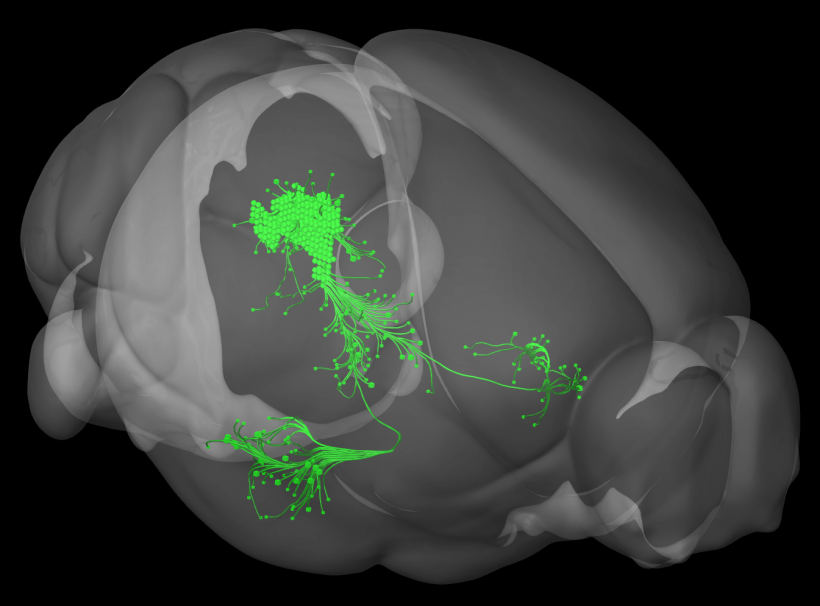 A group of dopamine neurons in the ventral PAG senses aversive events and...