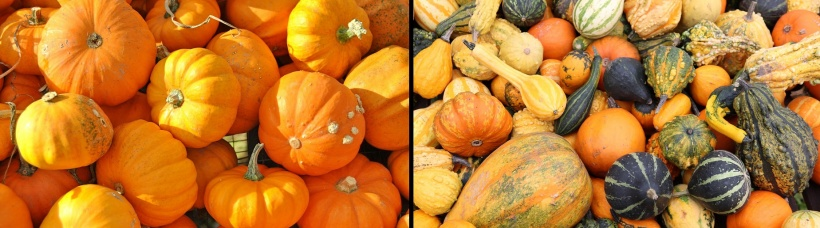 pumpkins of different sizes