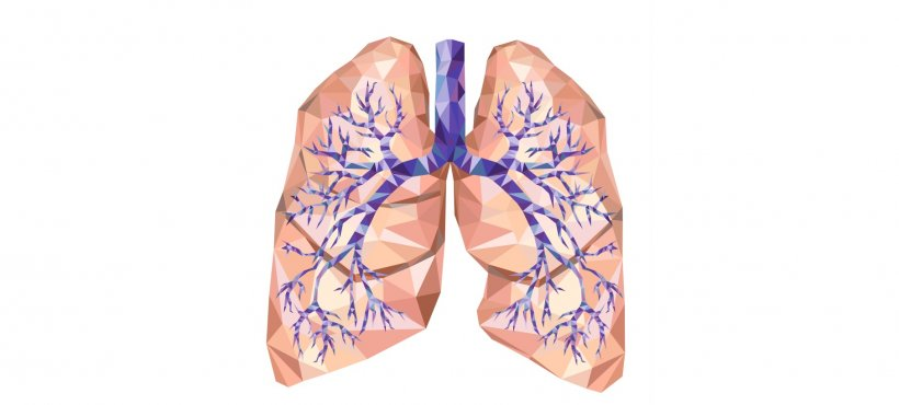 vector illustration of human lung