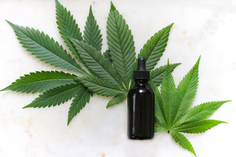 cannabis leaves and medical tincture bottle
