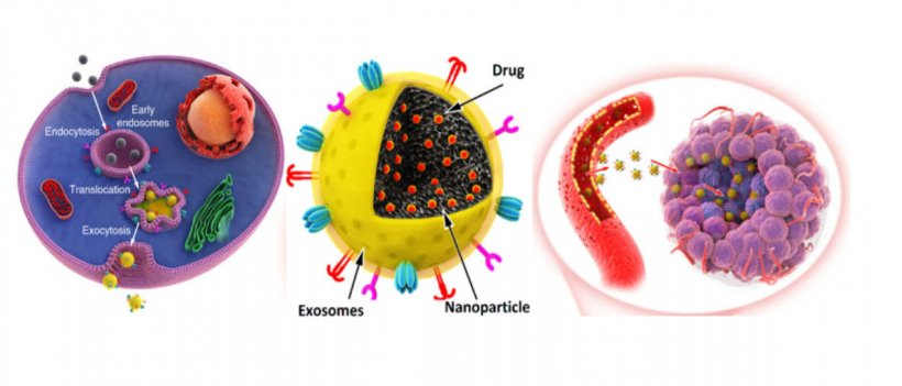 The new exosome-based nanomedicines enhanced tumor accumulation, extravasation...