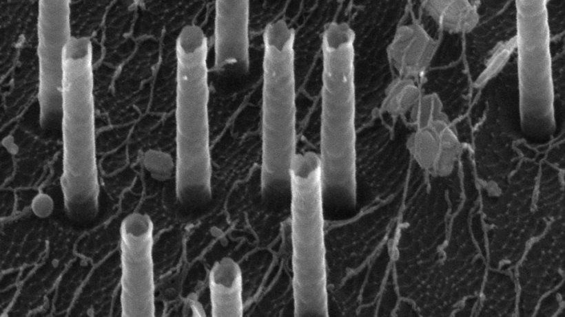 A scanning electron microscopy image of the hollow nanotubes used to deliver...