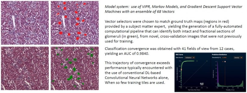 This example shows the VIPR concept applied to automated glomerulus...