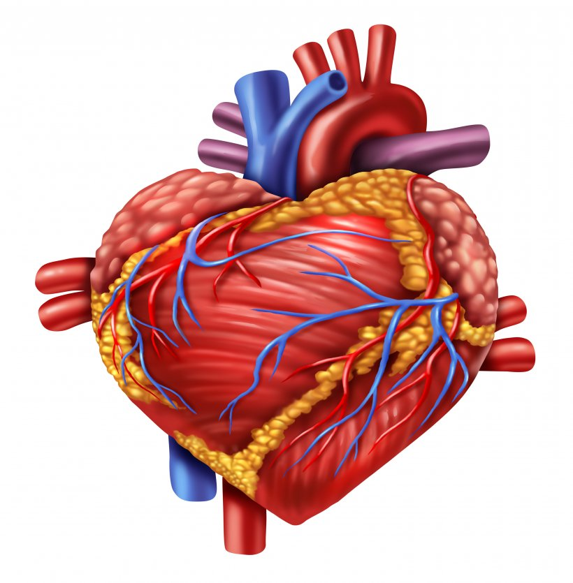 Covid-19 patients can safely continue taking heart drugs