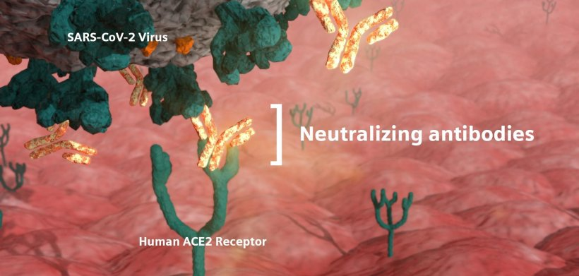 Neutralizing antibodies are critical in the fight against COVID-19 because they...