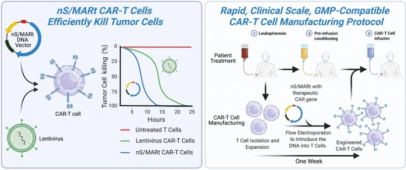 The illustration shows the working principle of CAR-T cell therapy (left) and...