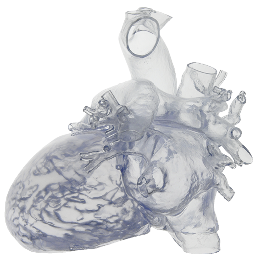 3-D printed cardiovascular model from Materialise, a registered Class 1 Medical...