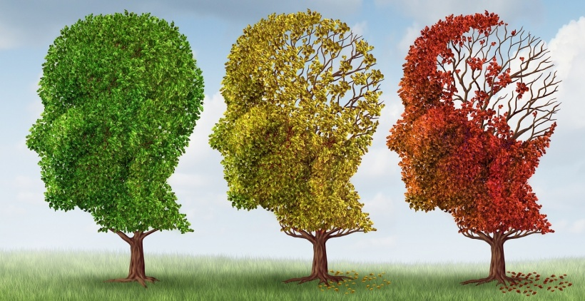 stock image of head-shaped trees, symbol for cognitive decline