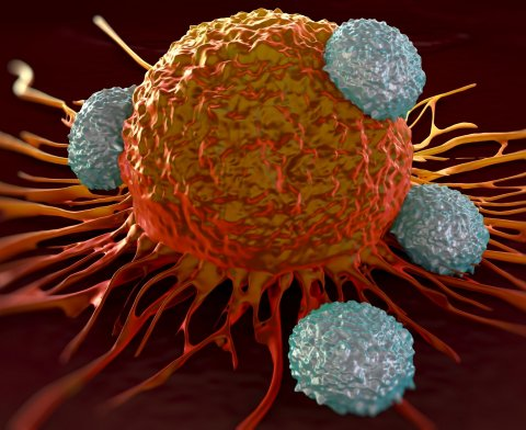 T-cells attacking cancer cell illustration