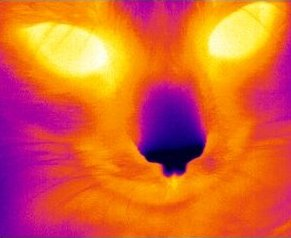 thermal image of a cat