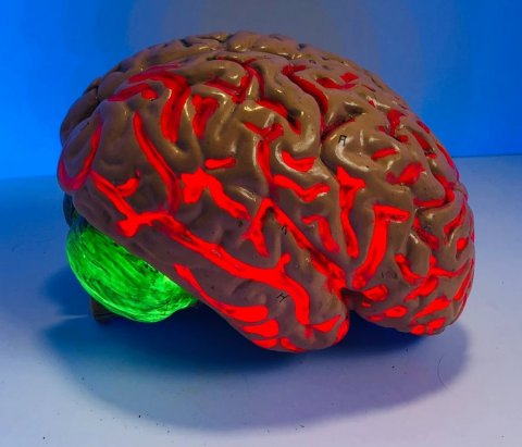 brain figurine with red and green light