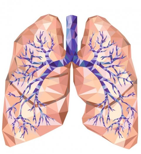 polygon illustration of human lungs