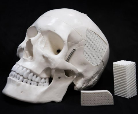 human skull next to white blocks