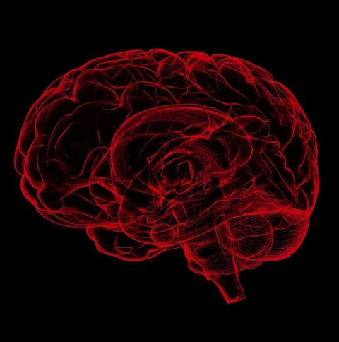 red illustration of human brain