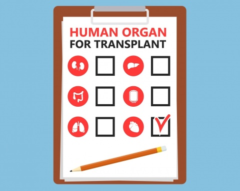 Set of Internal human organs icons representing organs and the tools necessary for organ transplants.