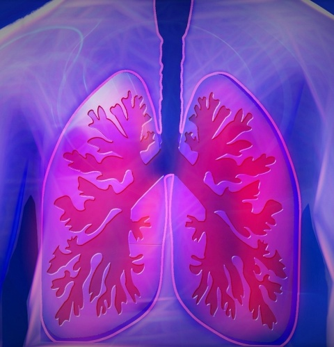 upper body, lungs