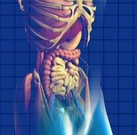 3d model of human digestive system