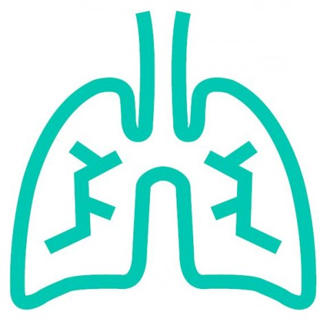 iconic depiction of human lung